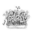 hand drawn basil microgreens healthy food vector image vector image
