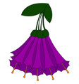purple iochroma on white background vector image vector image