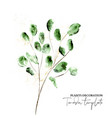 set hand-drawn floral elements modern green vector image vector image