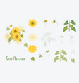 yellow sunflowers vector image vector image