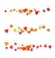 autumn leaves maple vector image
