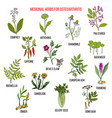 best medicinal herbs for osteoarthritis vector image vector image