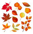 decorative autumn leaves and twigs set vector image