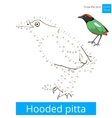 Hooded pitta bird learn to draw vector image vector image