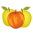 Three apples on white vector image vector image