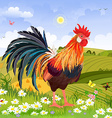 beautiful rooster in rural scenery vector image