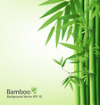 bamboo vector image vector image
