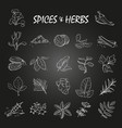 sketch spices and herbs collection on chalkboard vector image vector image