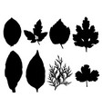 collection of silhouettes leaves isolated on white vector image