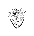 doodle strawberry vector image vector image