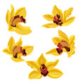 drawing orchid flowers vector image vector image