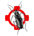 hand drawn cockroach on crosshatch vector image vector image