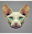 Sphynx cat low poly portrait vector image