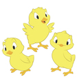 Cartoon Chickens vector image vector image