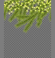 seamless border with relistic firtree sparkling vector image vector image