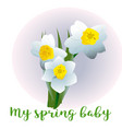 spring flower narcissus for newborn vector image vector image