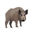 wild boar northern forest animal vector image vector image