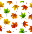 colorful maple leaves isolated on white background vector image vector image