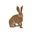 hare wild northern forest animal vector image