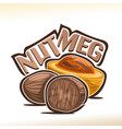 nutmeg vector image vector image