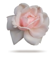 Pink rosebud isolated on white top vector image vector image