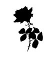 rose black silhouette barbed flower vector image