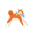 amusing akita inu carrying toy or playing with it vector image vector image