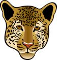 leopard cat vector image vector image