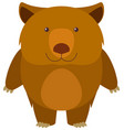 wombat on white background vector image vector image