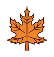 maple leaf foliage autumn line and fill icon vector image vector image