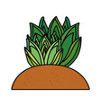 succulent plant icon vector image