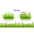 wild flowers forb alpine pastures spring grass vector image