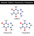 Caffeine Theobromine and Theophylline vector image vector image