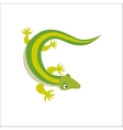 Chinese water dragon lizard vector image