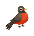 colorful beautiful robin bird vector image vector image