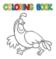 Coloring book of little quail vector image vector image
