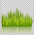 fresh green grass border isolated on transparent vector image