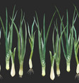 green onion composition vector image