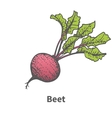 hand-drawn beet with tops vector image vector image