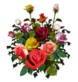 big bouquet of roses vector image vector image