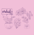 hand drawn sketch collection of orchid flowers in vector image vector image