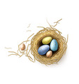 quail chicken eggs in nest easter holiday vector image vector image