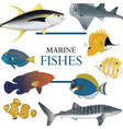 tropical fish collection marine vector image