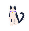 cute angry cat sitting with frowning face vector image vector image