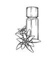 graphic essential oil bottle decorated vector image