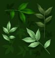 green leaf set vector image vector image