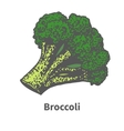 hand-drawn green broccoli tops vector image vector image