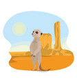 meerkat in the desert vector image vector image