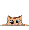 naughty cat are playing hide and seek for fun vector image