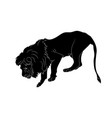 a lion who stands silhouette vector image